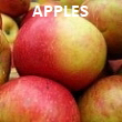 Pick-Your-Own Apples | 20 Varieties