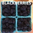 Pick-Your-Own Blackberries